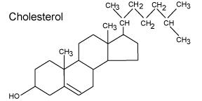 Cholesterol-Molecule