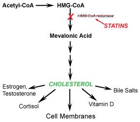 Cholesterol-Pathway-Diagram
